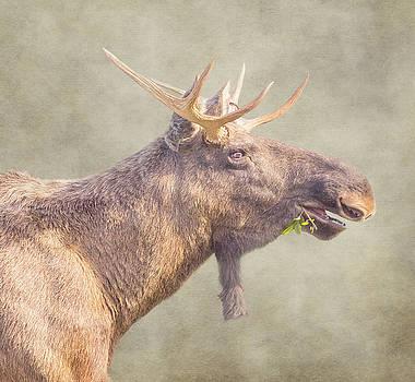 Mr moose by Roy McPeak