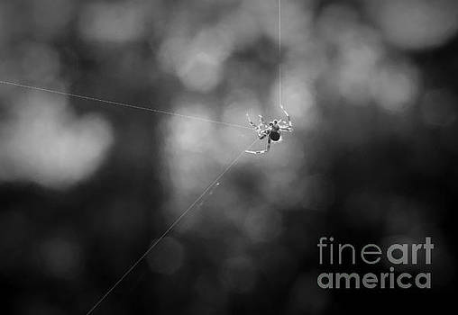 Dan Friend - Mr spider making his web