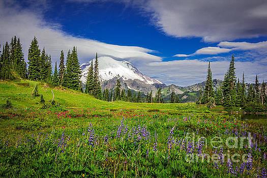 Mt Rainier and Wildflowers by Joan McCool