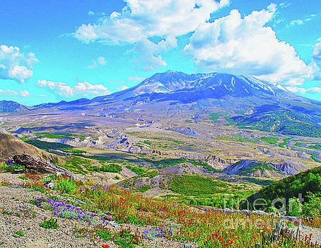 Mt. St. Helens Wildflowers by Ansel Price