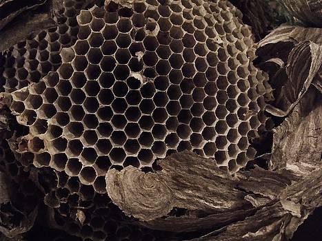 Anna Villarreal Garbis - Mudwasp Nest 6