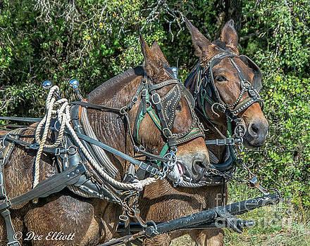 mule Team by Dee Elliott