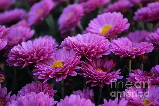 Mums The Word by John S