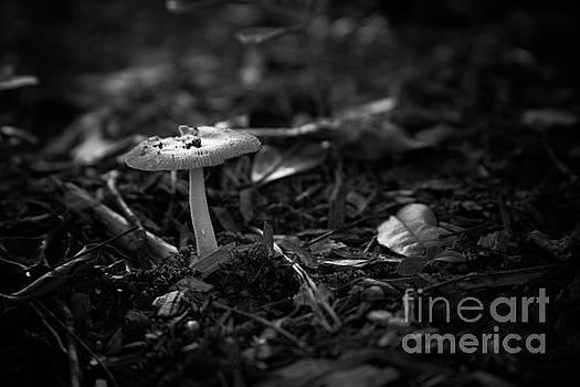 Mushroom 3 by Heather Roper