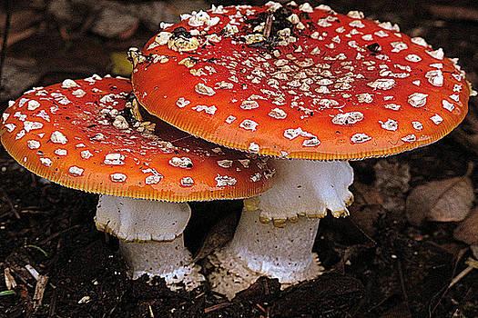 Mushroom Duo by Suzy Piatt