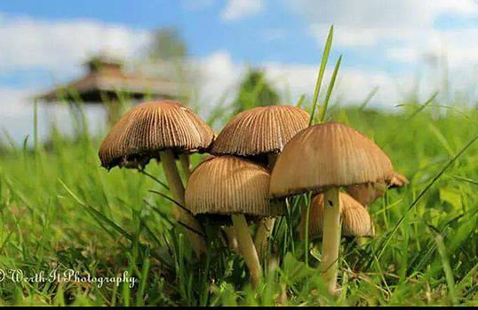 Mushroom by Sheila Werth