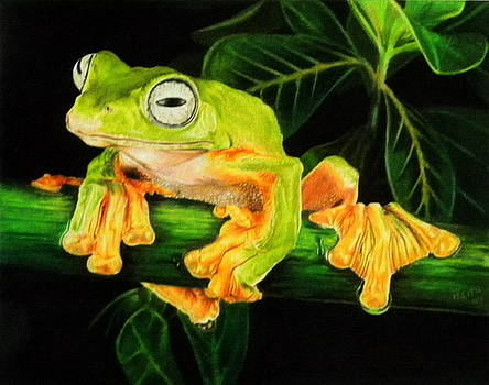 Musky Flying Frog by Barbara Keith