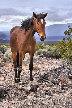 Adam Jewell - Mustang In The Nopah Wilderness