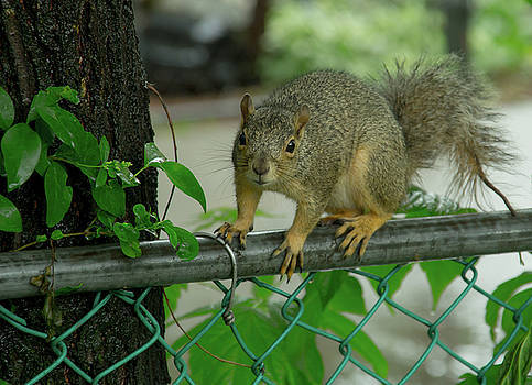 My Backyard Buddy by Greg Thiemeyer