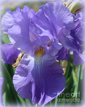 My Blue Iris by Dora Sofia Caputo Photographic Art and Design