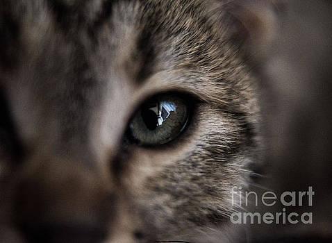 My Cat 1  by Bener Kavukcuoglu