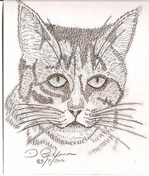 My Cat by Darryl Redfern