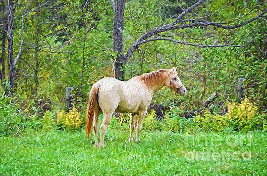 My Horse Cody - Digital Paint by Debbie Portwood