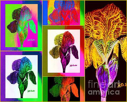 My Iris Gallery by Kimberlee Baxter