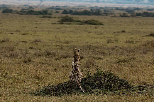 My Land , My World , My Africa by Ramabhadran Thirupattur