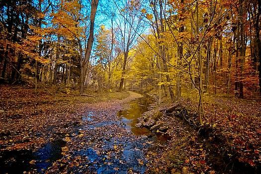 My Morning Walk by Linda Unger