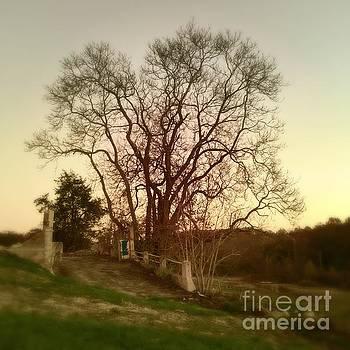 My tree has a soul  by Delona Seserman