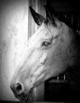 My world in Black and White by Barbara Dudley
