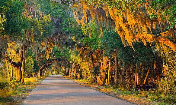 Myakka canopy road at sunset by John Myers