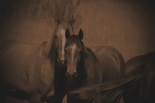 Mysterious Wild Horses by Margaret  Slaugh