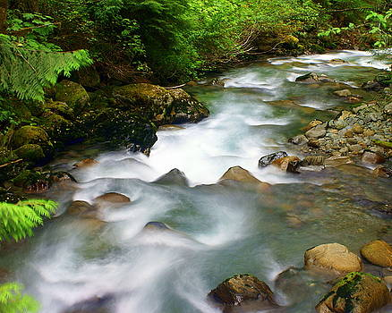 Marty Koch - Mystic Creek