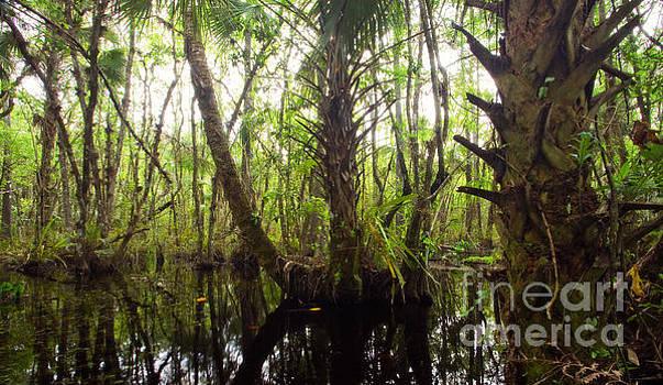 Mystic Swamp by Matt Tilghman