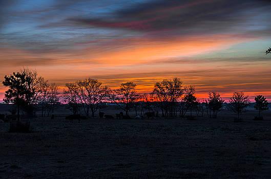 Mystical Morning by Bob Marquis
