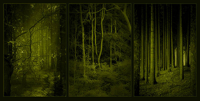 Mystical Woods by Dorit Fuhg