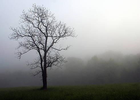 Marty Koch - Mysty Tree