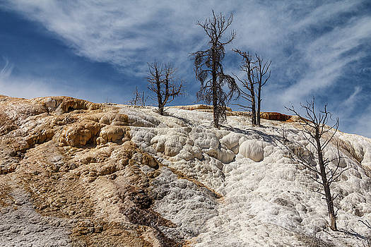 Naked Trees of Yellowstone by Steven Bateson