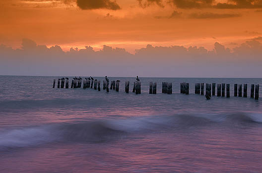 Naples, Florida by Carolyn Dalessandro