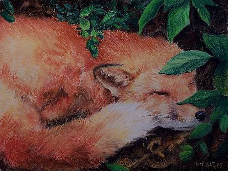 Napping Fox by Donna Teleis