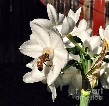 Narcissus and the Bee 1 by Daniele Smith