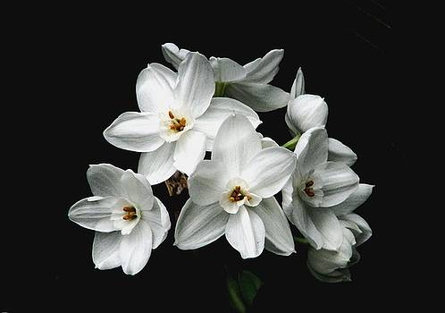 Narcissus The Breath Of Spring by Angela Davies