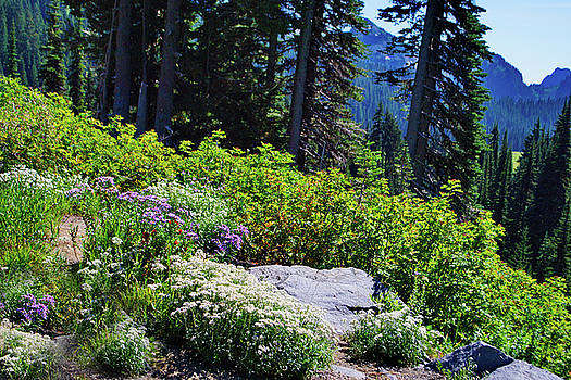 National Park wildflowers by Ansel Price