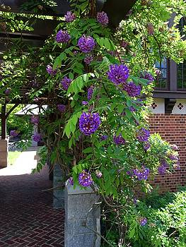 Native Wisteria Vine I by Angela Annas