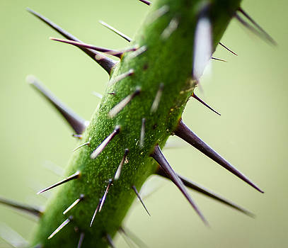 Natural Spikes by Don L Williams