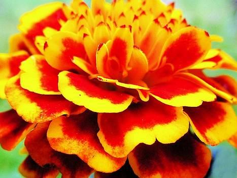 Nature Flower by Nereida Slesarchik Cedeno Wilcoxon