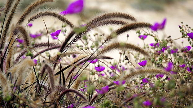 Nature in Abundance  by Laurie Pike