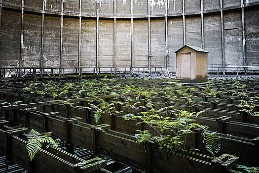 Nature takes back - inside cooling tower by Dirk Ercken