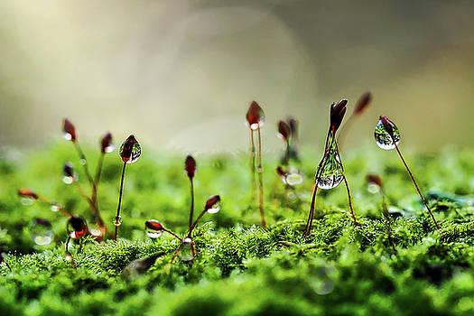 Nature Water Collectors by Susie Peek