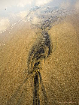 Joyce Dickens - Natures abstracts In The Sand Two