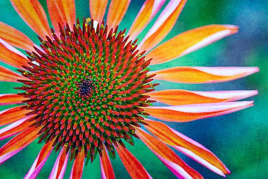 Natures Anti Depressant by Jeff Abrahamson