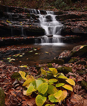 Natures Best by Lj Lambert