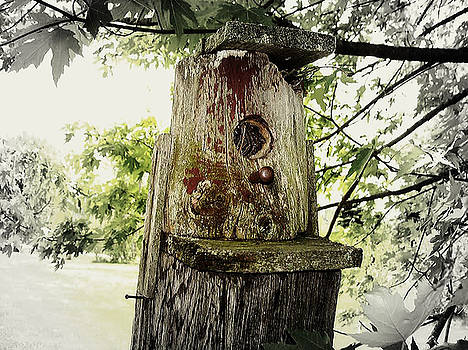 Natures Bird House by Linda Francis