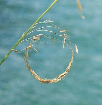 Nature's Circle by Ken Day