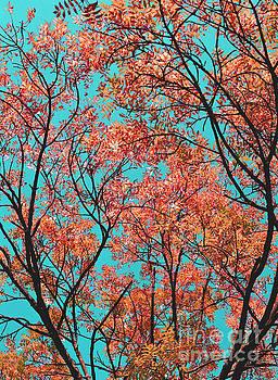 Natures Magic - Orange by Rebecca Harman