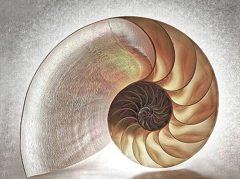 Nautilus Shell 3 - Toned by Susie Peek