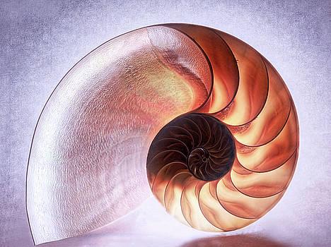 Nautilus Shell 4 - Toned by Susie Peek