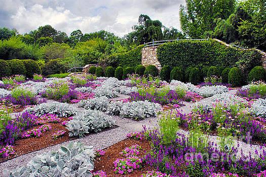 Jeff McJunkin - NC Arboretum V